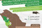 """البيئة"""" تستكشف وتكافح الجندب الأسود في مكة المكرمة والمدينة المنورة"""